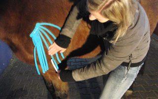 Frau legt Pferd ein Lymphtape im Schulterbereich an