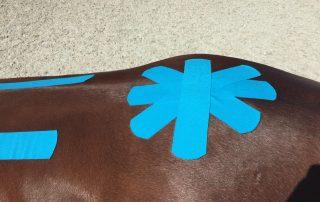 Kreuzförmig angeordnete Tapes auf Pferderücken