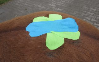Kreuzförmig angeordnete Tapes auf Pferderücken, das Fell wird angehoben